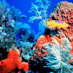 Coral Reefs Are Dying Off